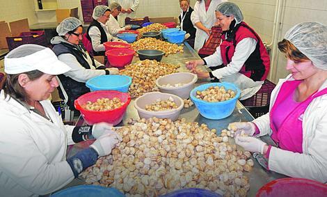 FRANCUZI JEDU SRPSKE PUŽEVE Leskovčani izvoze prerađeno meso