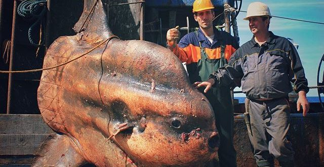 ribar iz rusije
